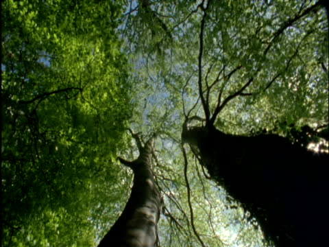 spinning pan under large beech trees in spring - season stock videos & royalty-free footage
