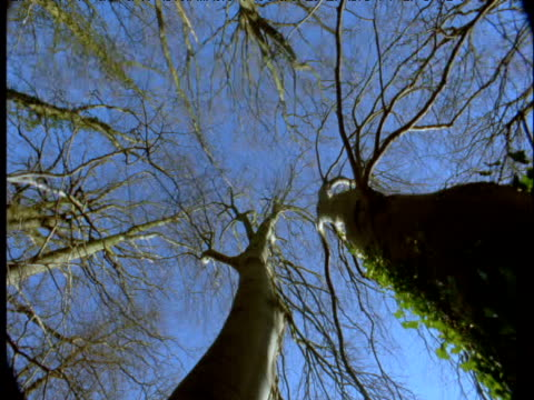 spinning pan under large beech trees in winter - season stock videos & royalty-free footage