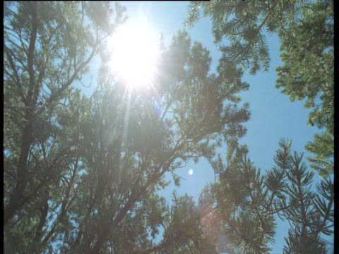 spinning shot of sunburst through branches of conifers, chaco canyon, new mexico - chaco canyon stock videos & royalty-free footage
