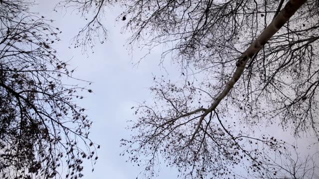 Spinnen unter Wald