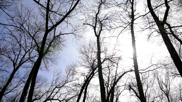 spinning under forest - bare tree stock videos & royalty-free footage