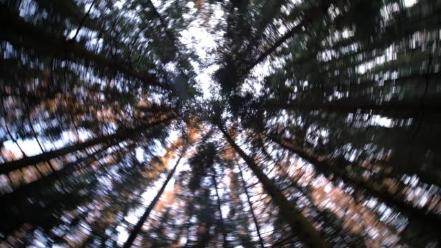 vídeos de stock e filmes b-roll de girar sob as árvores - pinheiro