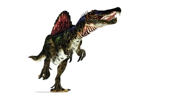 spinosaurus dinosaur animation. - 恐竜点の映像素材/bロール