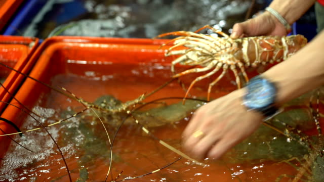 spiny lobster for sale at seafood market. - lobster stock videos & royalty-free footage