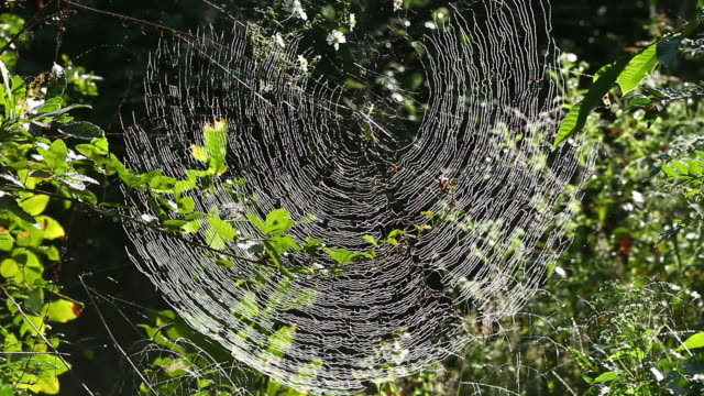 spiral orb web - grove stock videos & royalty-free footage