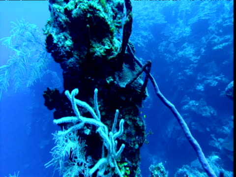 Spiral up around column of coral, Cayman Islands