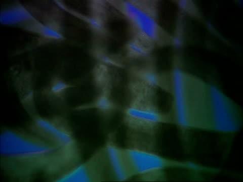 spirostomum blue background - animale microscopico video stock e b–roll