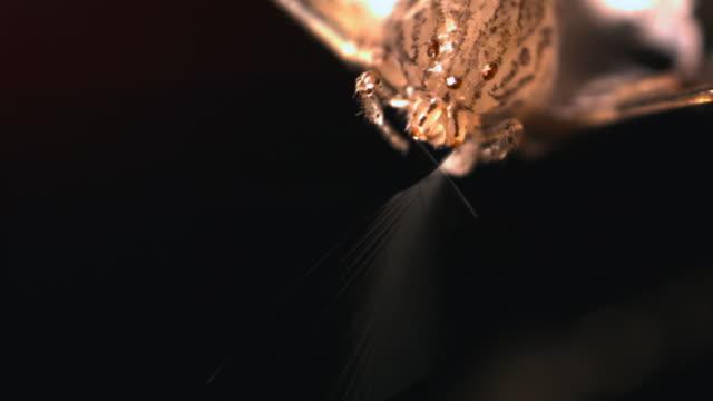 "slomo spitting spider spits silk at jumping spider, singapore - ""bbc natural history"" stock-videos und b-roll-filmmaterial"