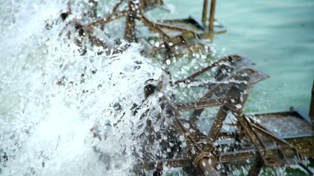 stockvideo's en b-roll-footage met spuit water - garnaal gerecht