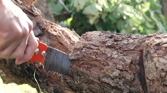 splinter while manual sawing trunk of tree by hand saw - limb body part stock videos & royalty-free footage