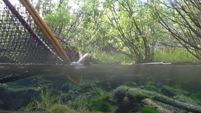 Split frame view of fisherman catching trout in clear stream