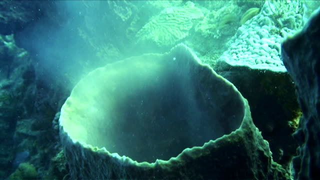 sponge spawning - spawning stock videos and b-roll footage