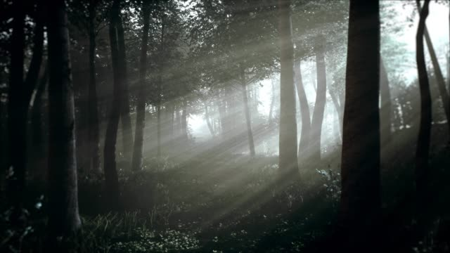 spooky dark forest at night in moonlight - tree trunk stock videos & royalty-free footage
