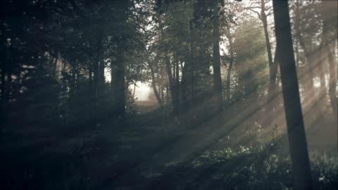 spooky dark forest at night in moonlight - fantasy stock videos & royalty-free footage