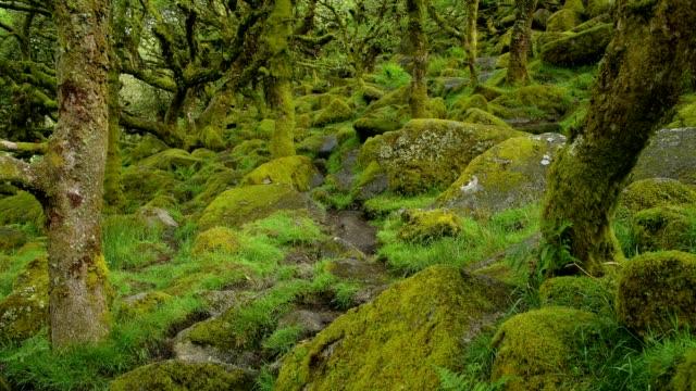 Spooky old oak forest, Wistman's Wood, Dartmoor, Two Bridges, Princetown, Devon, England, United Kingdom, Europe