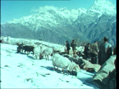 changabang expedition india himalayas ts sherpas at lorry at base camp bv sherpa carries sack lms chris bonnington drinks hands to indian leader ms... - base camp stock videos and b-roll footage