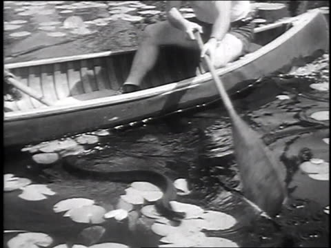 1947 montage sportsman capturing deadly snake in swamp from canoe / okefenokee swamp, georgia, united states - okefenokee national wildlife refuge stock videos and b-roll footage