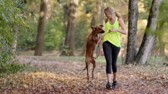 stockvideo's en b-roll-footage met sporty woman with long blonde hair in her mid thirties jogging in a park with her brown dog on a leather leash - alleen één mid volwassen vrouw