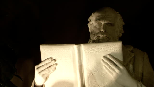 a spotlight illuminates a statue of charles darwin reading a book. - marble stock videos & royalty-free footage