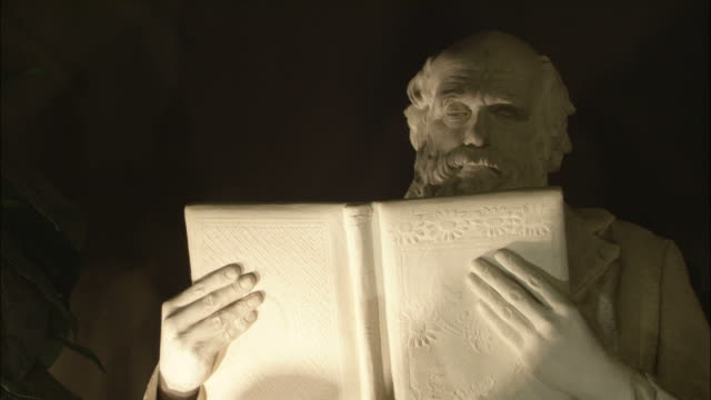 a spotlight illuminates a statue of charles darwin reading a book. - statue stock videos & royalty-free footage