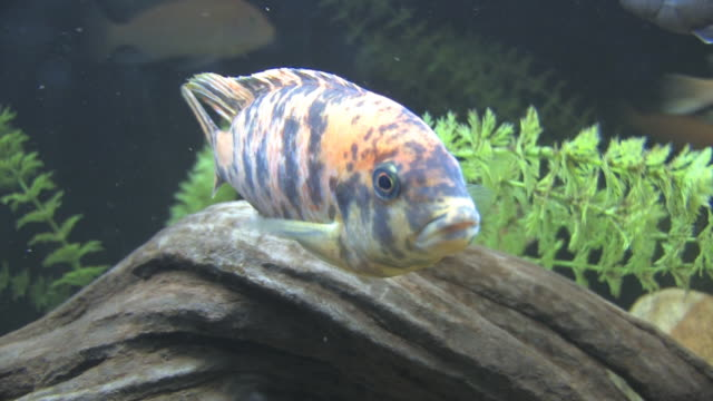 gepunktete fish 2-hd - kürzer als 10 sekunden stock-videos und b-roll-filmmaterial