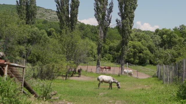 geflecktes pferd weidet gras in der natur - zaum stock-videos und b-roll-filmmaterial