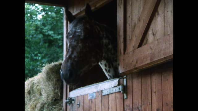 spotted horse looks out of stable door; 1986 - barn stock videos & royalty-free footage