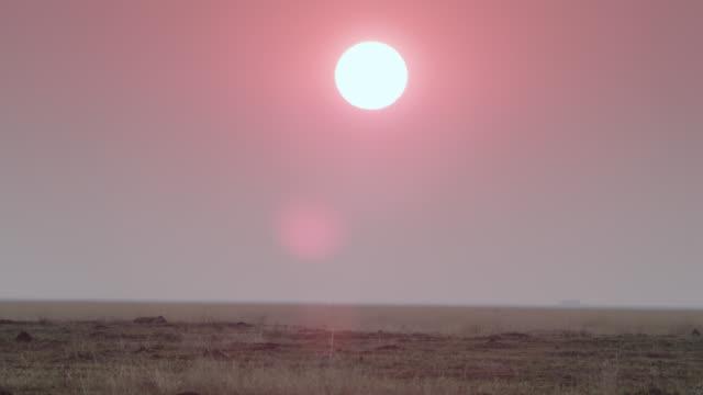 vídeos de stock, filmes e b-roll de spotted hyaena (crocuta crocuta) on savannah at sunset, zambia - savana