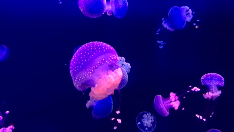 spotted jellyfish - 4k resolution stock videos & royalty-free footage