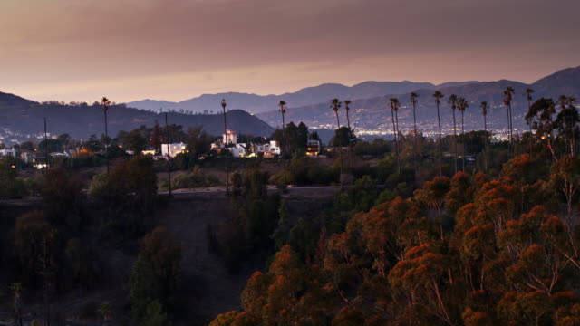 la sprawl seen through trees - aerial shot - hollywood california stock videos & royalty-free footage