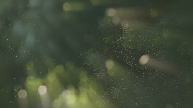 spray against morning sunlight with ray slow motion background - morning dew stock videos & royalty-free footage