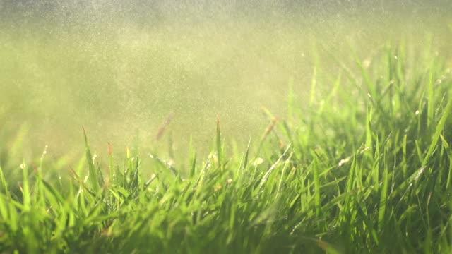 Spray On Grass Field Slow V