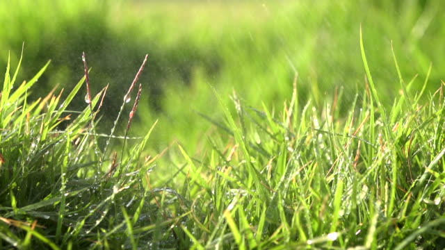Spray auf Grasfeld langsam VI
