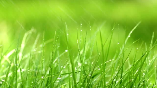 spray on grass - golfgreen bildbanksvideor och videomaterial från bakom kulisserna