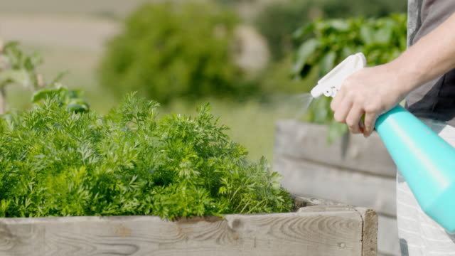 slo mo spraying fresh parsley in the garden - parsley stock videos and b-roll footage