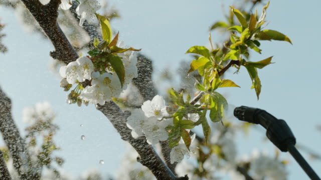 slo mo spraying pesticides over apple blossoms - fruit tree stock videos & royalty-free footage