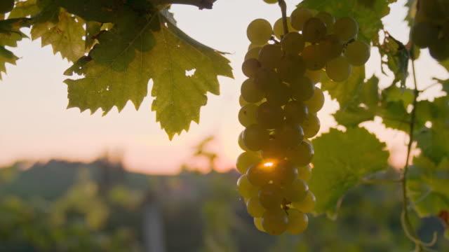 SLO MO Spraying The Grapes