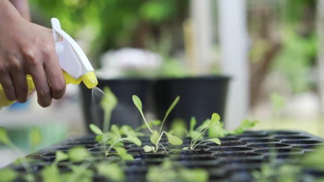 播種トレイの新芽に水を吹き付ける - 水撒き点の映像素材/bロール