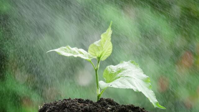 vídeos de stock e filmes b-roll de spraying water to a tree. - equipamento de irrigação