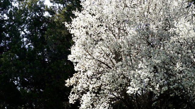 spring blossoms - anatolia stock videos and b-roll footage