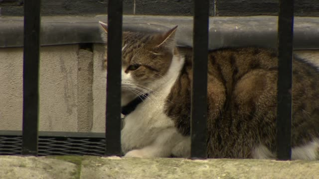 cabinet arrivals england london downing street ext larry the cat cleaning himself then seated / greg clark mp alongto no 10 / karen bradley mp /... - parlamentsmitglied stock-videos und b-roll-filmmaterial