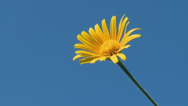 hd: frühling flower - staubblatt stock-videos und b-roll-filmmaterial