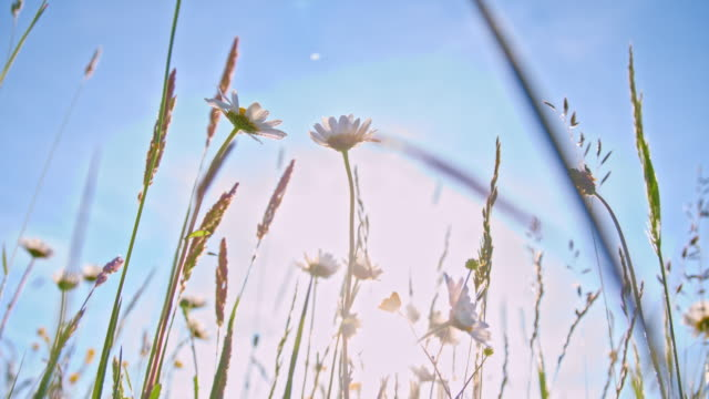SLO, MO, Spring flowers in the meadow