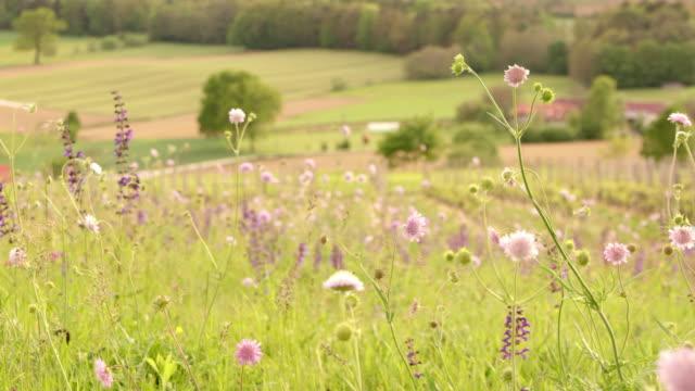 SLO-MO-DS-Frühling Blumen wiegen sich im wind