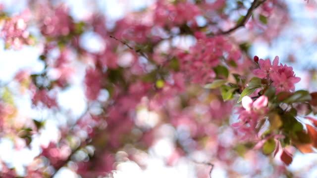 spring flowers tree - petal stock videos & royalty-free footage