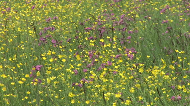 HD: Frühling Blumen