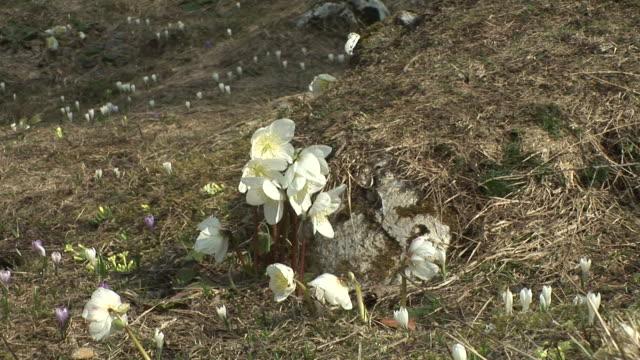 vídeos de stock e filmes b-roll de hd: flores de primavera - estame