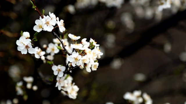 spring flowers - saturated color stock videos and b-roll footage