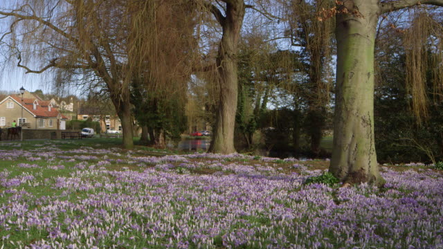 stockvideo's en b-roll-footage met spring flowers - scarborough engeland