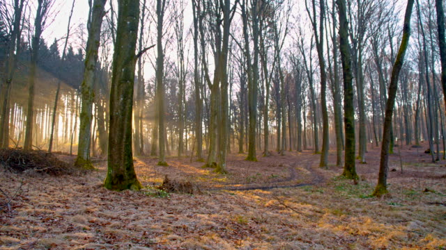 stockvideo's en b-roll-footage met ds spring forest of deciduous trees - kale boom
